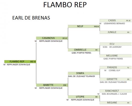Flambo genealogie