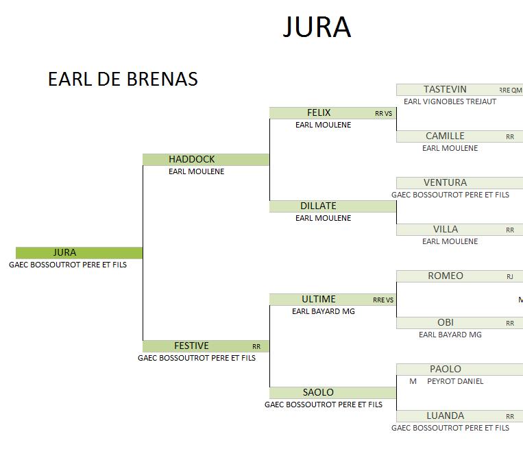 Jura genealogie 4