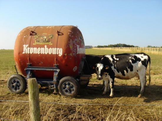 kronenbourg-vaches.jpg