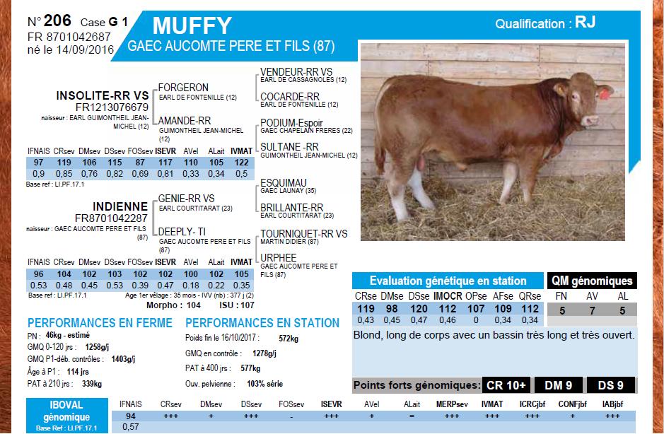 Muffy 2